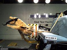 Safety Harness Crash Test