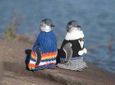 Click to enlarge image penguin_jumpers_1.jpg