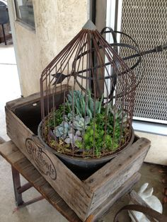 Old chicken feeder and succulents.