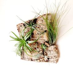 Vertical Garden Air Plants on Sustainable Virgin by Plantzilla