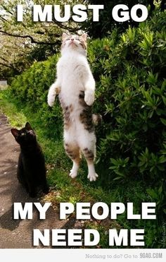 I must go my people need me.......What in the world what people?......The cats of the moon........O yhea ok.......