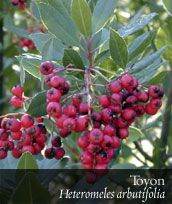 Tree Of Life Nursery Wonderful With Lots Helpful Information About Native Plants