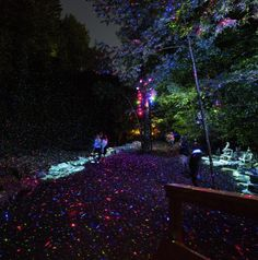 Foresta lumina by moment factory