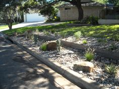 Front yard landscape - native plantings, large boulders and river rock along with high industrial steel edging as a retaining wall.