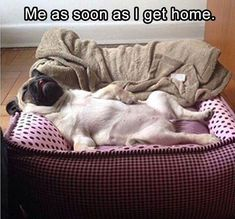 This is pretty accurate, really. #funny #dogs #doglovers