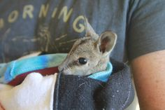 Safe Haven relies on the help of volunteers and the generosity of our supporters. Donations are welcome. Safe Haven, Fundraising Events, Primary School, Volunteers, The Help, Wildlife, Community, Engagement, Animals