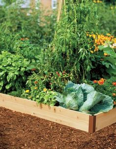 110 00 raised beds are easy to set up plant and maintain producing