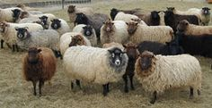 Welcome to Natural Yarn 100% Pure New Wool from local flocks of Shetland, Manx Loaghtan, Jacob, Portland and White Faced Woodland sheep.  H...
