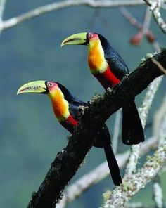 Find out how to combine the Amazon Rainforest and Rio de Janeiro into 1 amazing tour!