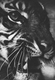 Cara de tigre!