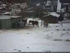 Circus games in the snow with our ponies Indi and Cisco