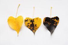 three of spades  (mary jo hoffman)