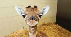 Gosta de bebezinhos? Perfil em rede social faz sucesso mostrando fotos fofas de filhotes de animais - Fotos - R7 Bichos