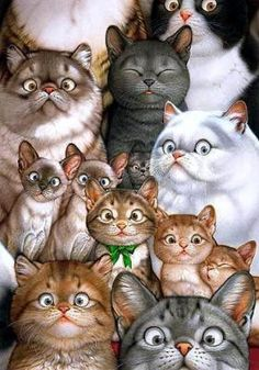 Beautiful Eyes (hermosos ojos) - Many Cats Illustration by Makoto Muramatsu I Love Cats, Crazy Cats, Cool Cats, Image Chat, Photo Chat, Here Kitty Kitty, Kitty Cats, Siamese Cat, Cat Drawing