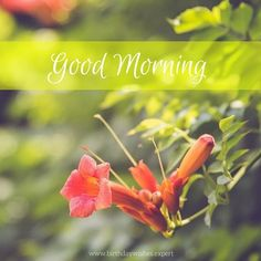 Are you looking for images for good morning motivation?Check this out for perfect good morning motivation inspiration. These entertaining images will brighten your day. Good Morning For Him, Good Morning Cards, Good Morning Funny, Good Morning Sunshine, Good Morning Photos, Good Morning Flowers, Good Morning Messages, Good Morning Greetings, Morning Pictures