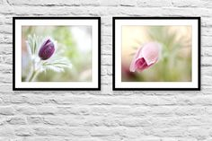 Shabby Chic Flower Photography Print Set by IonAnthosPhotography