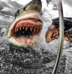 El terror del oceano
