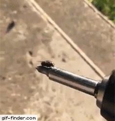 A Fly Has An Impressive Grip
