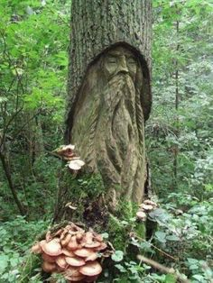Based on your personality what Celtic Tree are you connected too? All Trees will be based off of the Celtic Tree Alphabet and the symbolism behind each Tree in Celtic lore. Flora Und Fauna, Tree People, Forest People, Tree Faces, Tree Carving, Green Man, Tree Art, Faeries, Garden Art