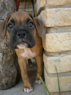 puppy eyes.