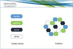 Protéines constituées à partir d'acides aminés