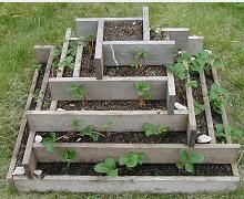strawberry tower instructions.  50 plants in a 36 inch square. five progressively larger squares stacked and filled with dirt.