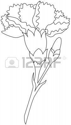 Carnation outline