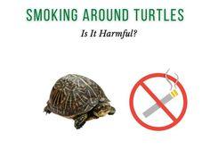 Is it harmful to smoke around turtles?