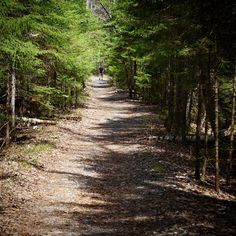 Walking in the woods... Definitely my happy place! #spring #nature #backpacking #wanderlust #trail #hiking #newhampshire #whitemountains #nationalpark #wilderness #pemigewasset #trees by patchesthru