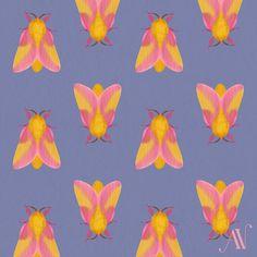 Moth 12 Rosy Maple Moth Dryocampa rubicunda (in italics) Illustration Sketches, Illustration Artists, Illustrations, Rosy Maple Moth, 30 Day Drawing Challenge, Pretty Cool, Tat, Patterns, Drawings