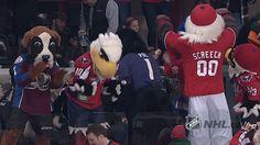 dance dancing sports hockey nhl ice hockey mascots nhl mascots from Moves Like Jagger, Ice Hockey, Cheerleading, Nhl, Dancing, Gifs, Fandoms, Sports, Hs Sports