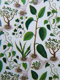 Fabric by Josef Frank via Kim Lemmon, The Green Room Interiors, Chattanooga, Tennessee; colorful organic print like this for the powder room wall?