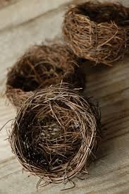 nests in nature pictures - Google Search
