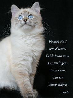 Was Katzen und Frauen gemeinsam haben.