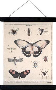 Schoolplaat - Insecten - M - HK Living