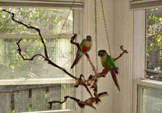 Homemade Bird Toys, Diy Bird Toys, Parakeets, Parrots, Cockatiel, Diy Bird Cage, Bird Cages, Bird Aviary, Bird Perch