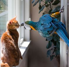 parrot and cat having a chat.
