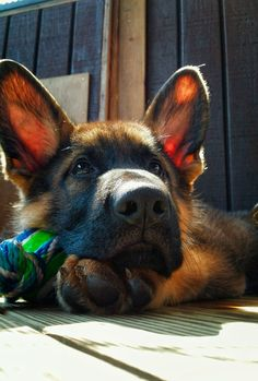 """Hope you're doing well.From your friends at phoenix dog in home dog training""""k9katelynn"""" see more about Scottsdale dog training at k9katelynn.com! Pinterest with over 20,600 followers! Google plus with over 170,000 views! You tube with over 500 videos and 60,000 views!! LinkedIn over 9,300 associates! Proudly Serving the valley for 11 plus years"""