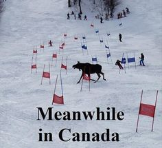 The 29 Most Canadian Things To Ever Canada In Canada Canada Funny, Canada Eh, Meanwhile In Canada, Canadian Things, Ski Racing, Pictures Of The Week, Illustrations, Cool Landscapes, Animales