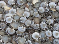 via the fuller view Living In Denver, Touch Of Gray, Rainbow Connection, Scallop Shells, Grisaille, Gone Fishing, Life Is Like, Shades Of Grey, All The Colors