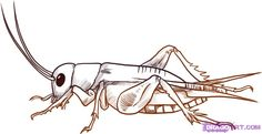 cricket insect - Google Search