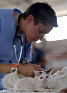 """""""It is rare for the veterinarian to limit itself to one or two pets. Expect any companion animals that it salvages from its work to be missing body parts, have an expensive disease, smell strange, ..."""
