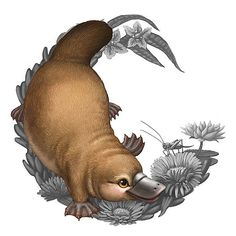 Illustration of a platypus for the Bush Babies II coin series Animal Paintings, Animal Drawings, Art Drawings, Australian Birds, Australian Bush, Duck Billed Platypus, Baby Animals, Cute Animals, Motifs Animal