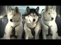 """Sled Dogs Say, """"Heck With This Crap,"""" And Roll Out Some Sweet, Sweet Wheels - BarkPost"""