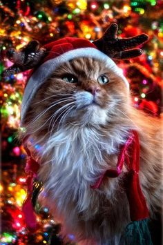 ♥ OMG! I aspire to have my cat Christmas portraits this amazing