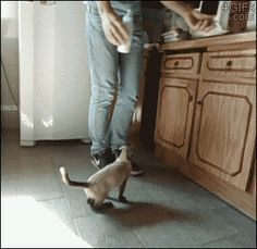 This is the cutest gif I've ever seen