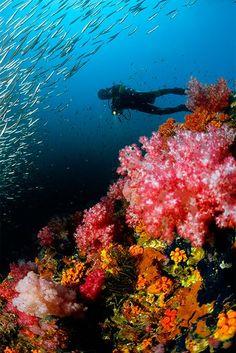 diver-corals-mergui-archipelago-myanmar_85219_600x450.jpg (387×580)