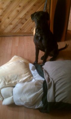 Use your old pillows to stuff your dogs bed. Upcycling and your dog will love it!