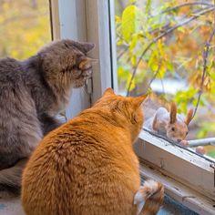 Cats. Animals, Pets, Cat, Kittens, Feline