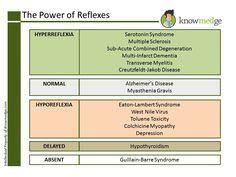 ABIM Internal Medicine Exam Prep: Know your Reflexes (Hyperreflexia, Normal, Hyporeflexia, Delayed, Absent) (www.knowmedge.com)